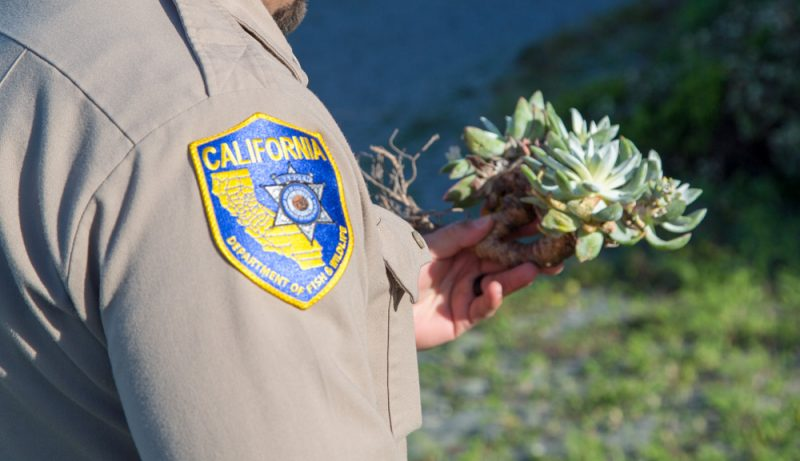 FIsh and Wildlife officer holding a succulent.