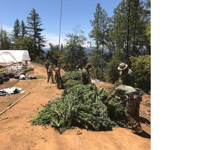bundling marijuana