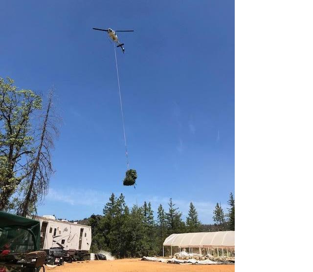Helicopter hauling marijuana