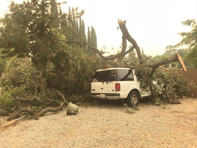 The fire can create its own weather. Big winds from the fire dropped this tree onto a vehicle.