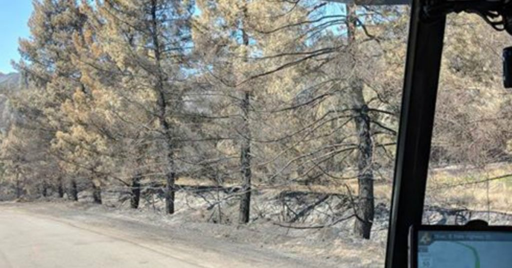Blackened trees lining Hwy 20 july 2