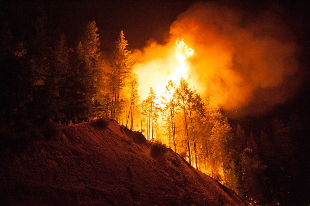 Trees burn on the side of 299 near Whiskeytown Lake.