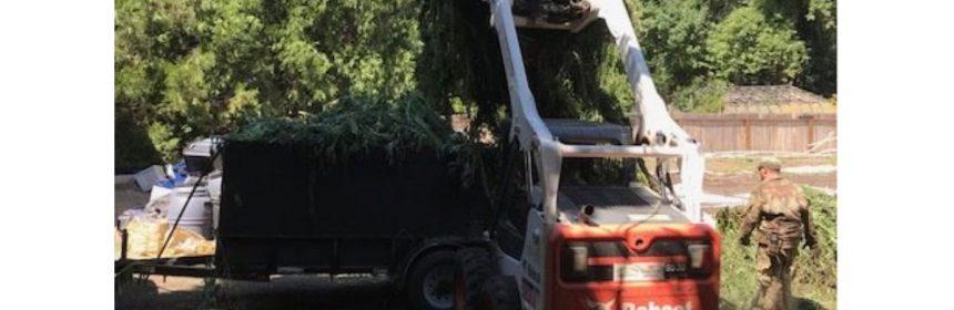 Loader dropping marijuana into trailer