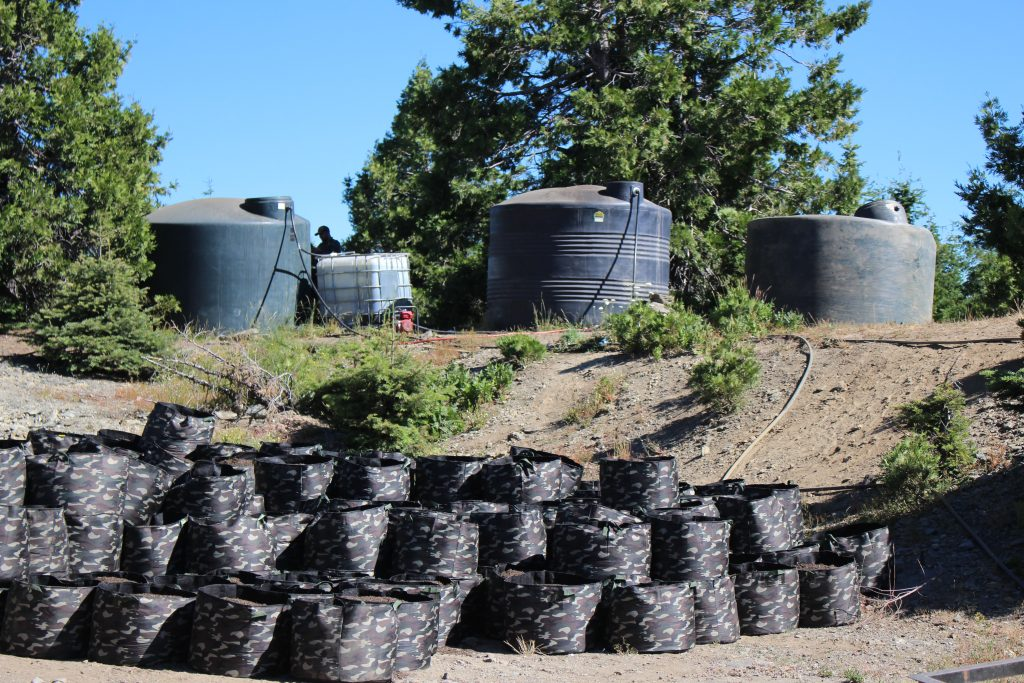 Water tanks smart pots Raided marijuana parcel