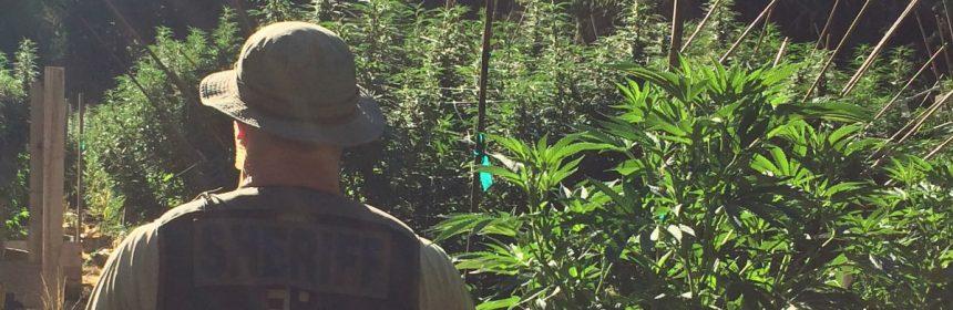 Deputy Sheriff in Marijuana
