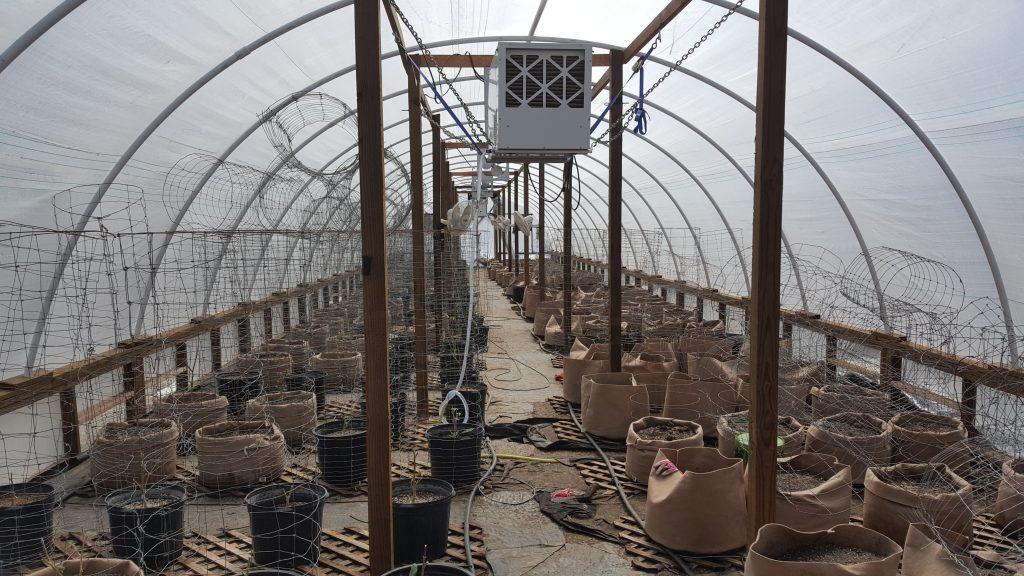 empty greenhouse Marijuana Rio Dell Police [Photo from the Rio Dell Police Department]