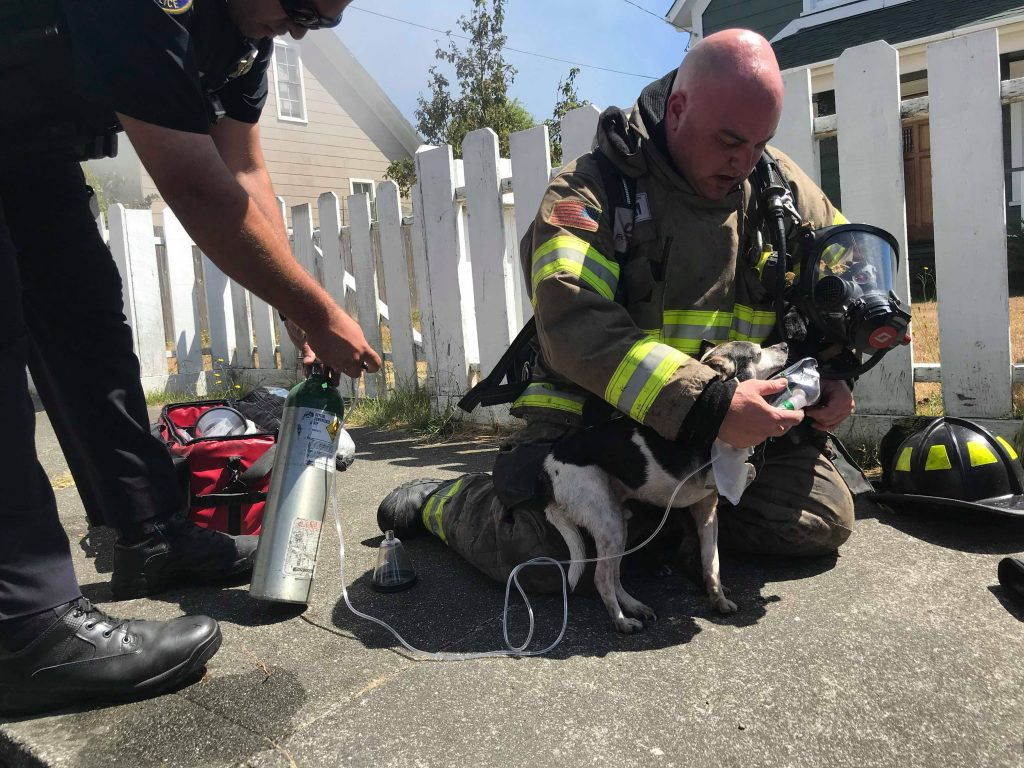 A dog rescued from burning structure looks up trustingly at the firefighter who is helping.