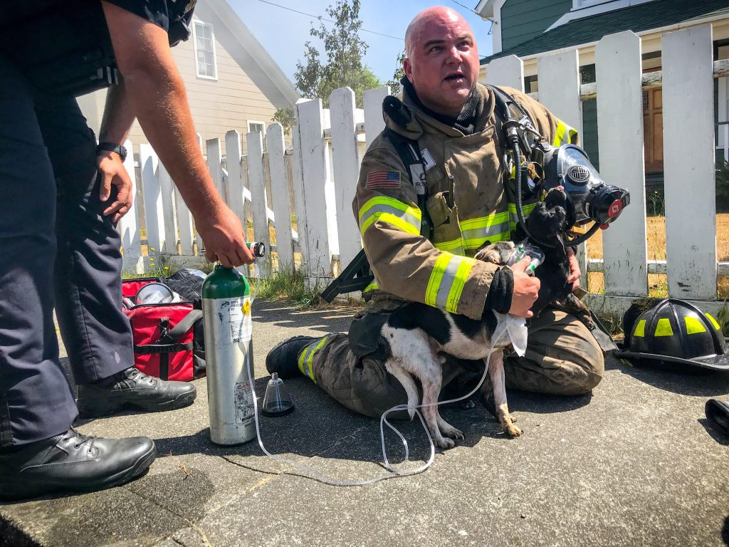 Firefighter Jason Campillo gives oxygen to dog rescued from house.