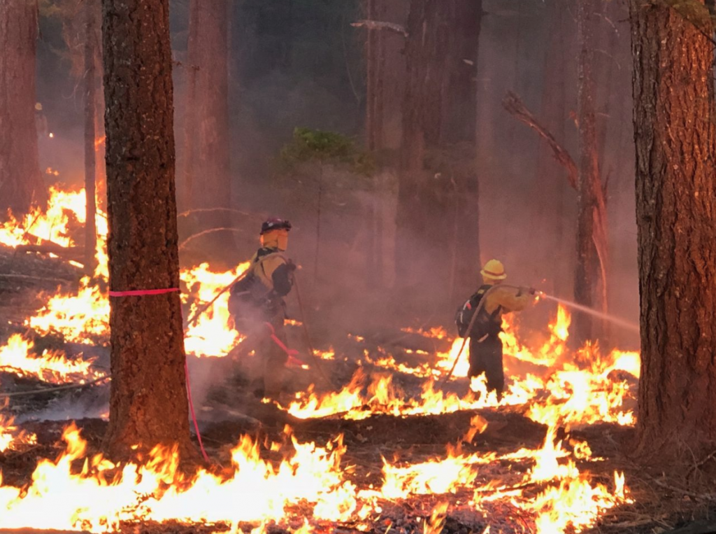 Firefighters from Pleasant Grove City, Utah wading through the Ranch Fire yesterday on the north end of the Mendocino Complex.