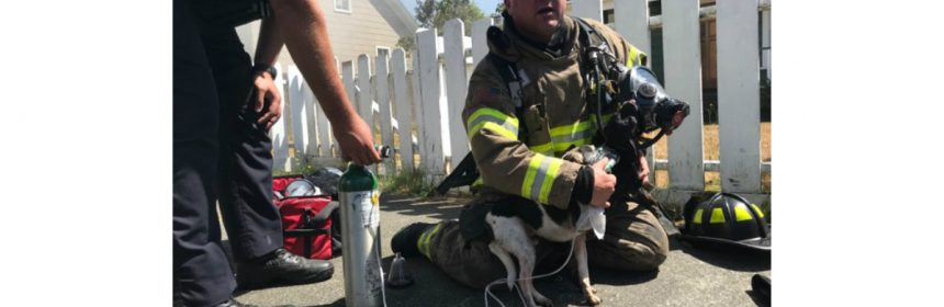 FIrefighter with rescued dog