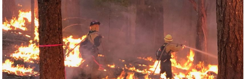 Firefighters fighting in a forest