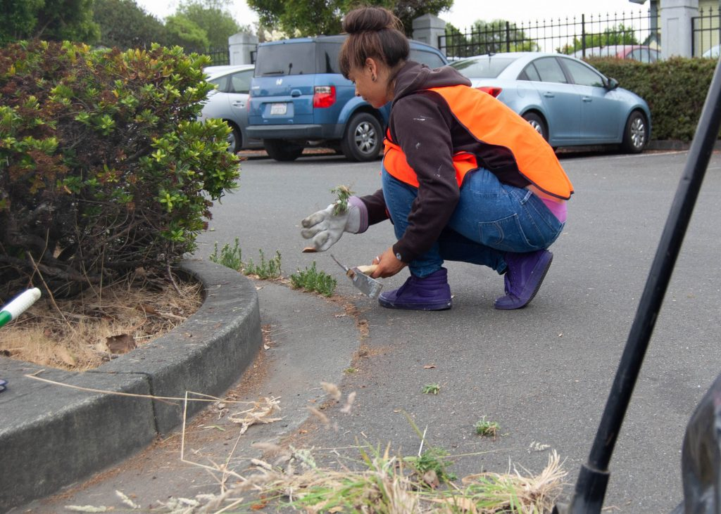 Helping Humboldt program participant Kirstie Wright, of Eureka, removes weeds and trash from the parking lot of the Humboldt County Library's main branch in Eureka.