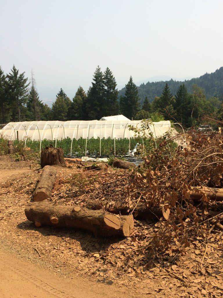 Marijuana grow violations greenhouse