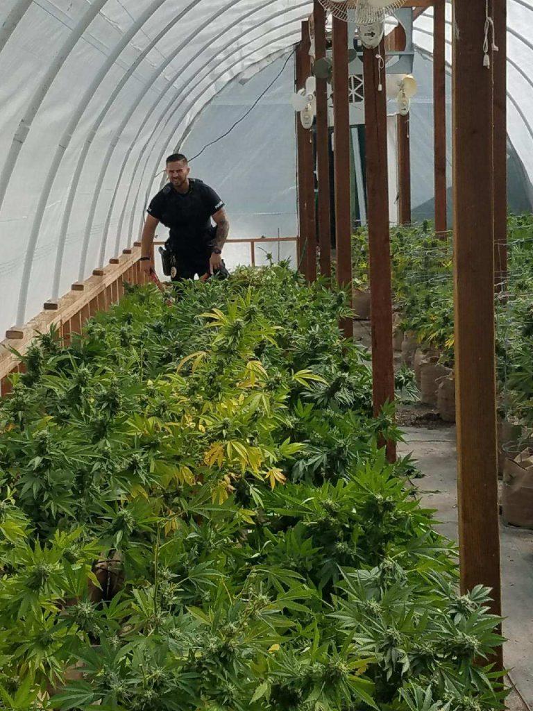 Marijuana Rio Dell Police [Photo from the Rio Dell Police Department]
