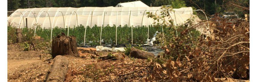 greenhouse logging marijuana