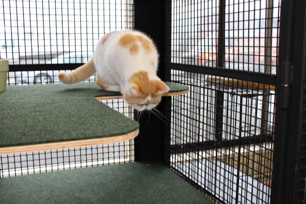 HART office cat, Mr. Smooshface, enjoying the new condos.