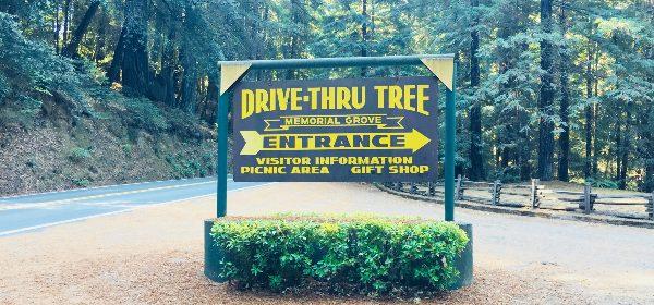 Drive thru Tree feature Icon