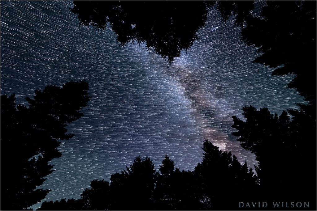 Looking through a canopy of Douglas-fir, we see paths that the stars made over the course of several minutes. The Celestial Equator splits the star field; the stars on top are revolving around the northern polar axis, while the lower stars are revolving around the southern polar axis.