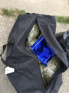 Pounds of marijuana in tote