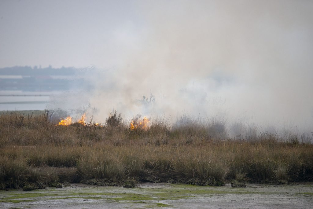 Fire on dolby island