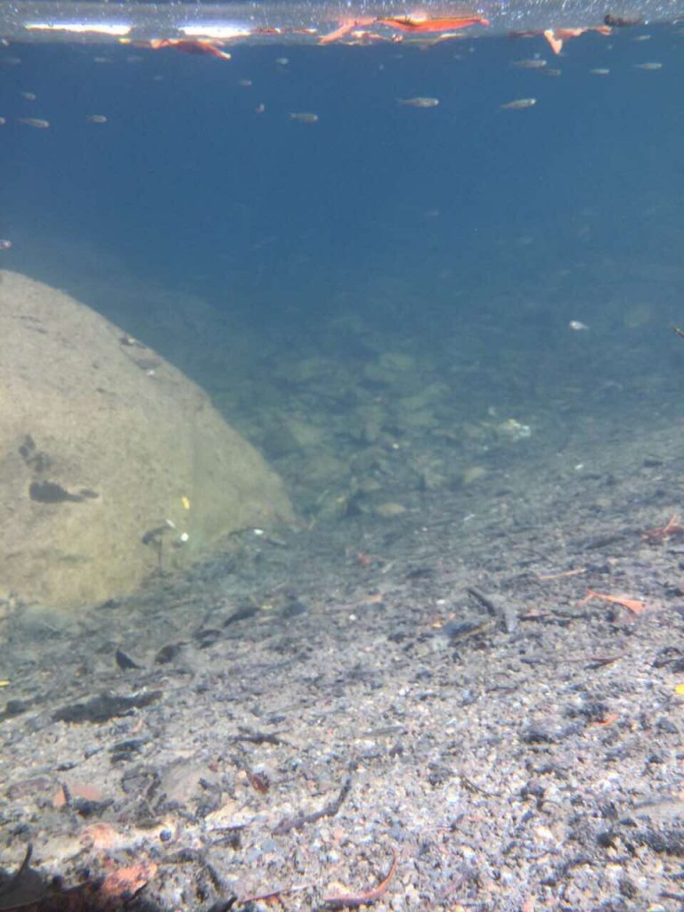 Fish in Larabee Creek
