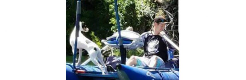 Jack Russell terrier on boat