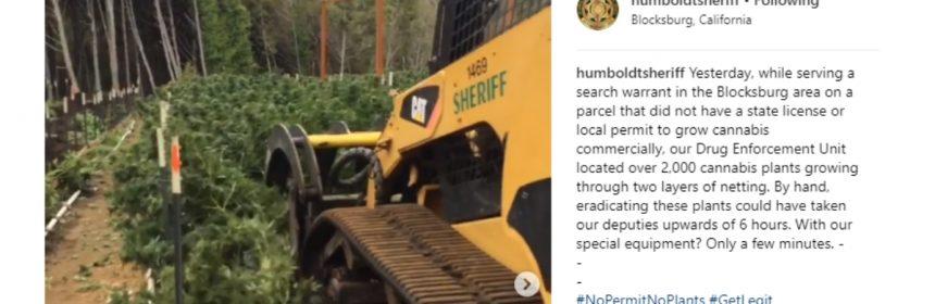 Humboldt COunty Sheriff eradicating cannabis marijuana