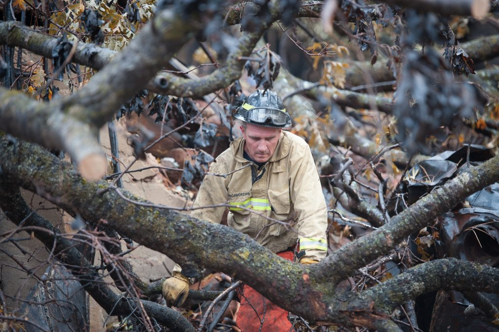 Stanisluas County Firefighter Gary McAndrews surveys a tree he is about to cut to assist members of the team searching a house in paradise.