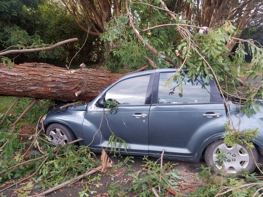 A tree crushed a car in Arcata this morning.