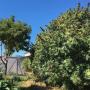 Cannabis garden Emily Hobelmann feature cannabis garden