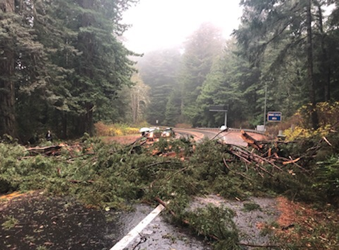 Hwy 101 closed by a downed tree.