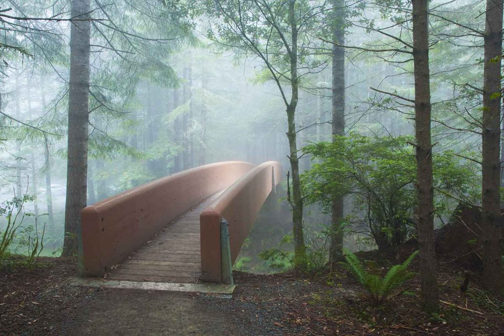 Lady Bird Johnson Park [Photo from Redwood National and State Parks]