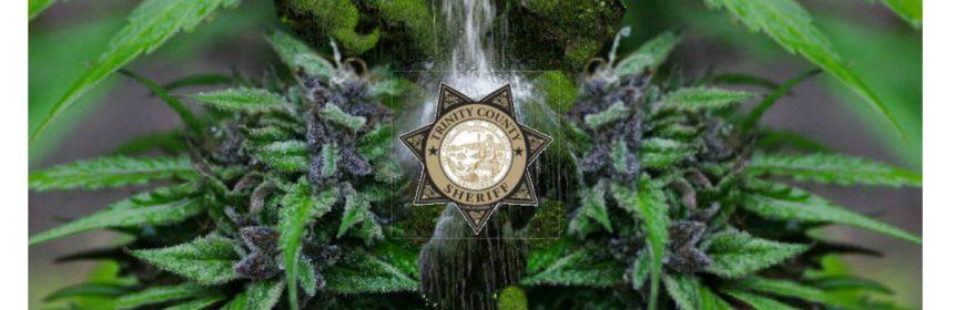 Trinity COunty sheriff marijuana feature icon