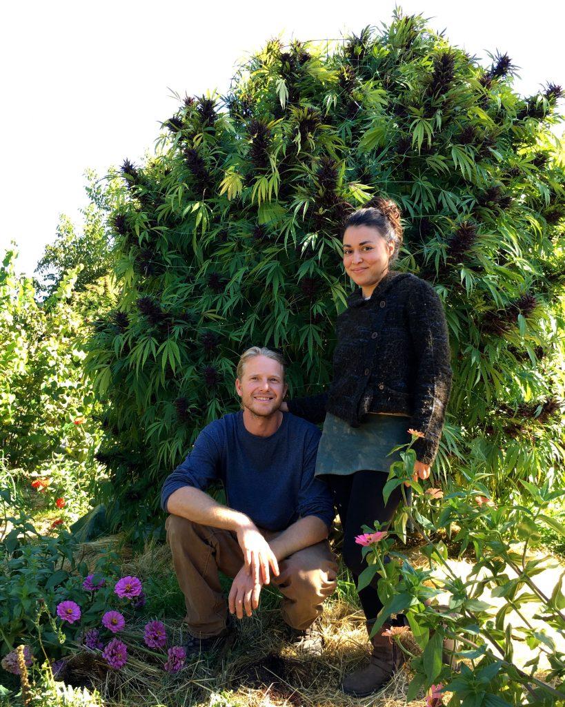 Forrest Gauder and Patricia Vargas cannabis garden