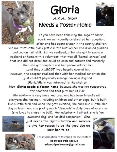 Adopt dog poster