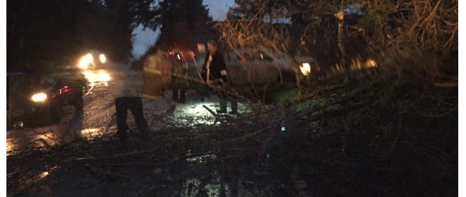 Fire crew clearing away a downed tree this morning on Shelter Cove Road below Beach Road. [Photo from Cheryl Antony]