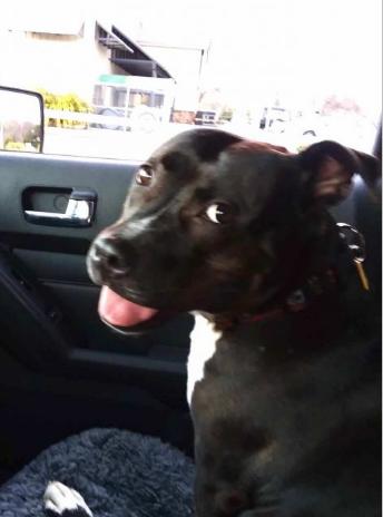 Gloria the dog in a vehicle