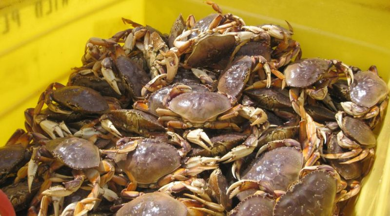 Commercial crab catch.