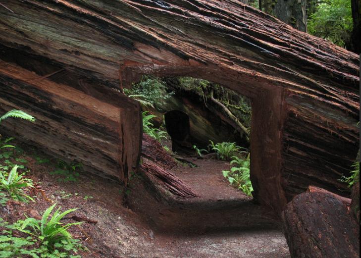 Redwood State Park trail