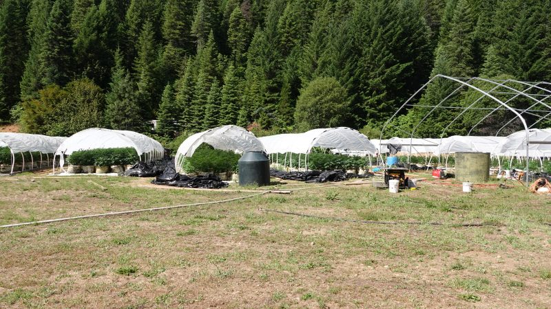 Fish and Wildlife Releases Information About Cannabis Raids in Trinity and Shasta Counties