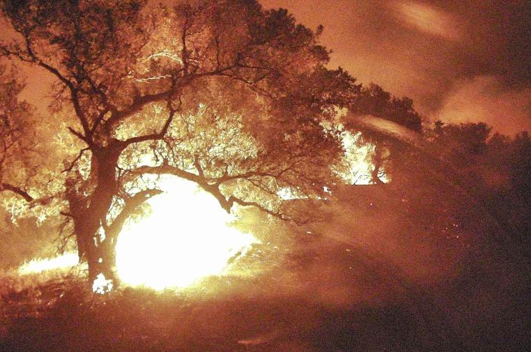 Oak tree burning last night.