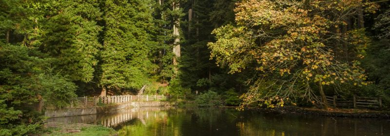 Sequoia Park duck pond.