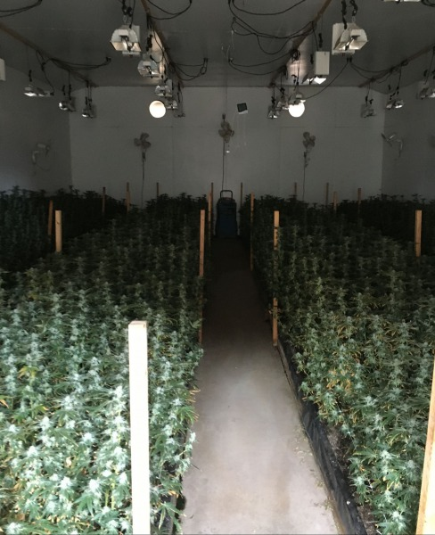 Indoor cannabis grow [Photo by HCSO]