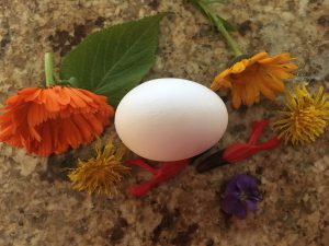 Egg and flowers Frugal Foodie Shanna Archibold