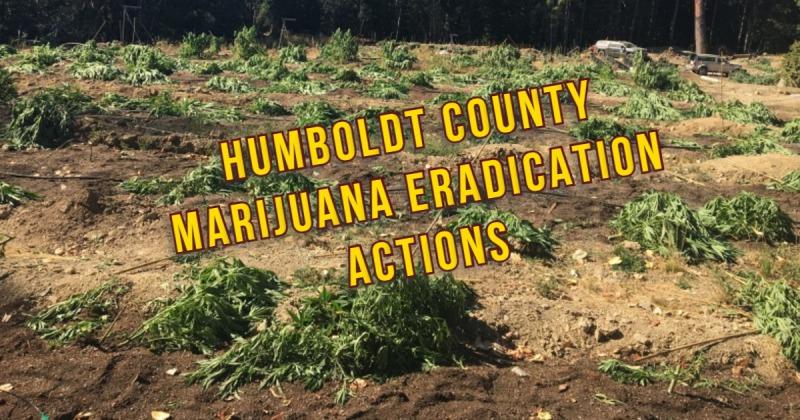 Humboldt County Marijuana Eradication Actions