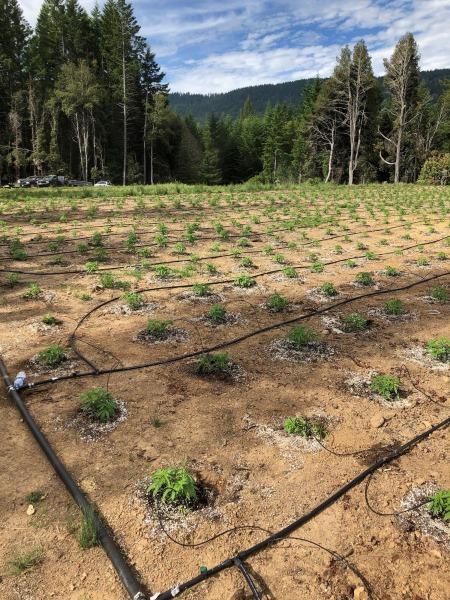 starting marijuana garden