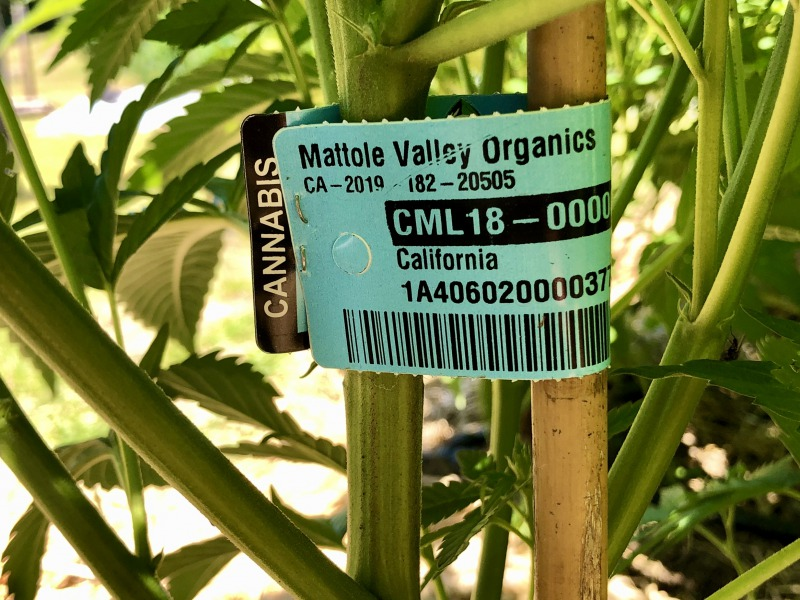Cultivation tags