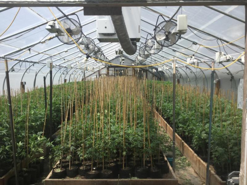Clones in greenhouse on Thomas Road in Salmon Creek