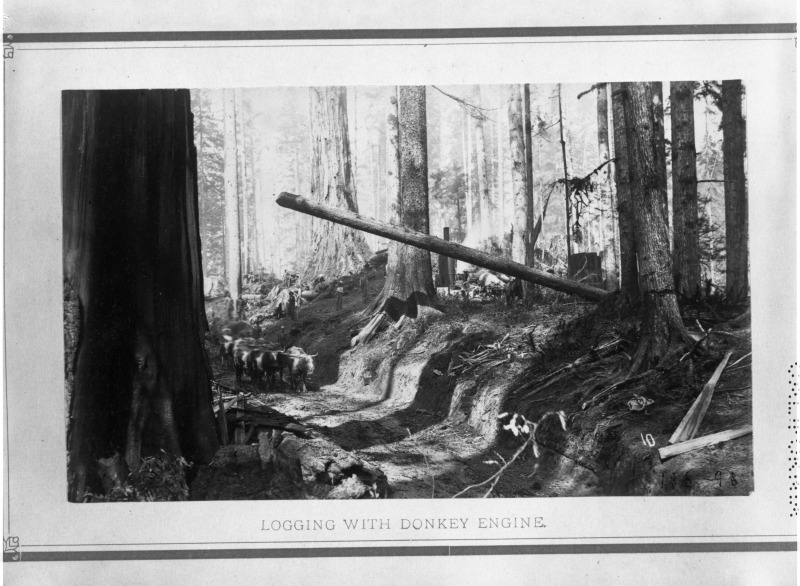 Logging with Donkey Engine (skid road with oxen in background)[Image by Edgar Cherry, from Palmquist Collection in the Humboldt Room of HSU]