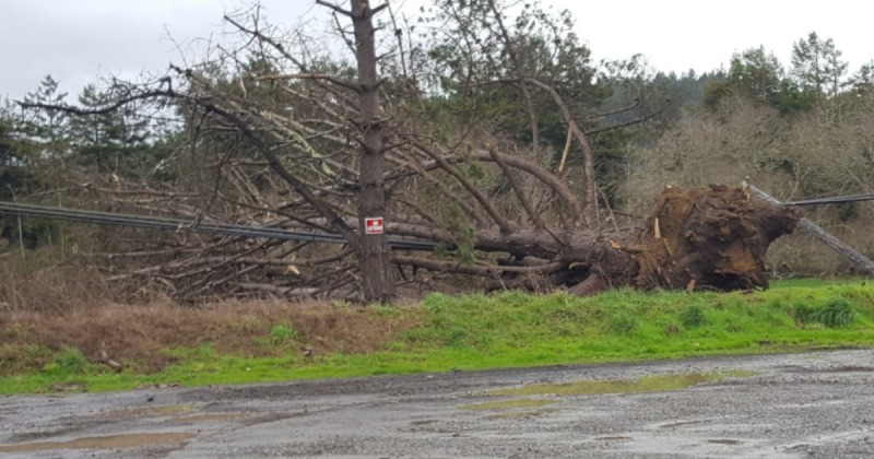 Tree down into powerlines